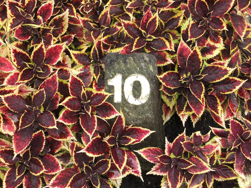 10 Lynda.com Pro Tips