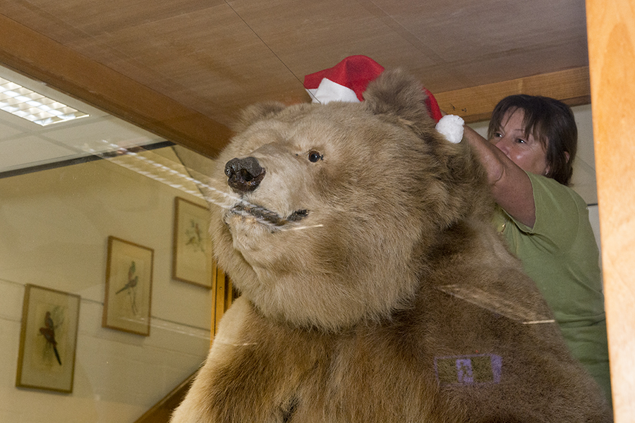 """Frank the Bear in Santa hat"" by Tony Dwyer ©2015"