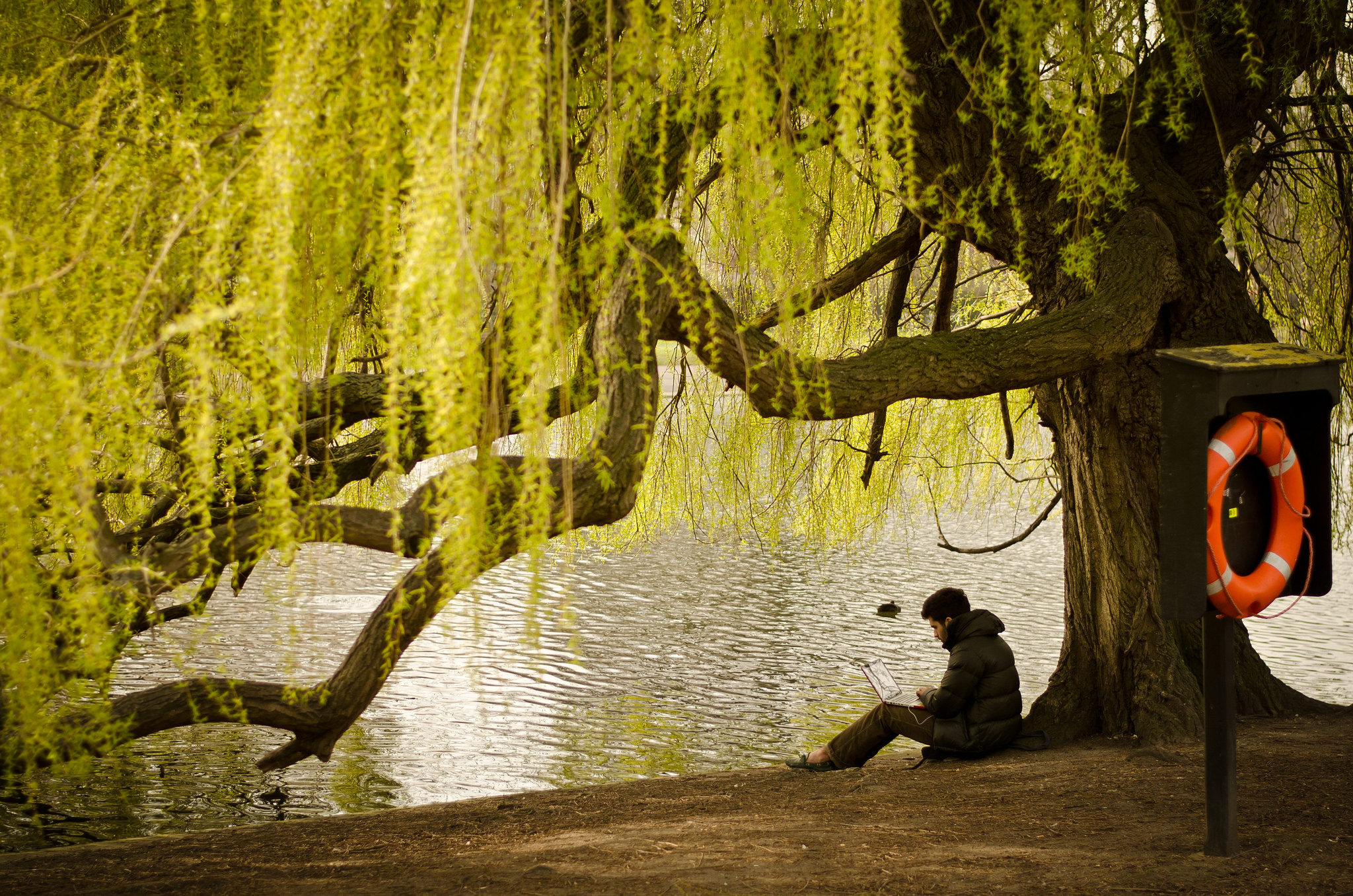 """Working under a willow"" by Garry Knight 2012 CC BY 2.0"