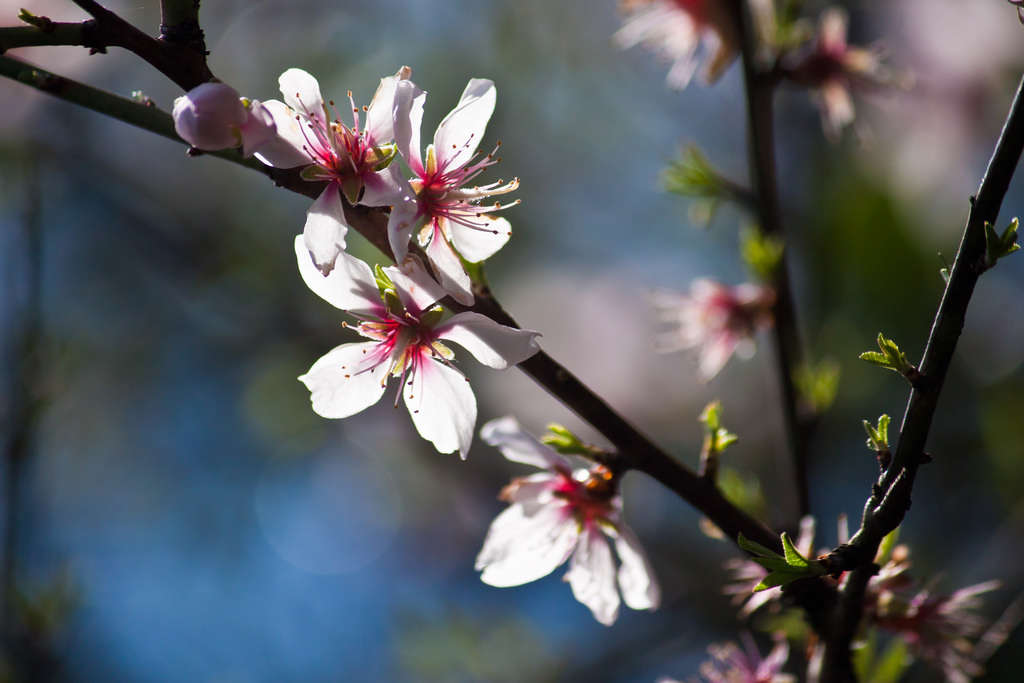 """Blossoms"" by Theophilos Papadopoulos 2011 CC BY-NC-ND 2.0"